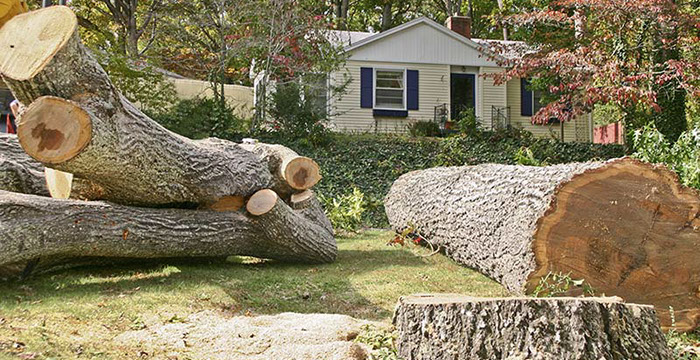 Emergency tree removal service san antonio tx 210997 9055 emergency tree removal service san antonio tx sciox Choice Image